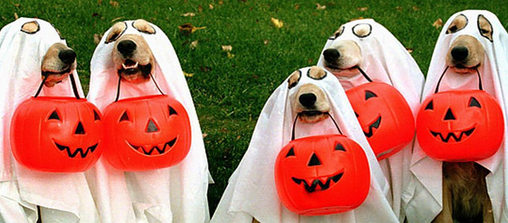 13 Spook-Free Safety Tips to Keep Your Kids & Pets Safe this Halloween